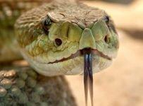 slang